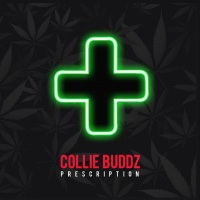 Collie Buddz - Prescription - @colliebuddz @Rootfire_ World Premiere