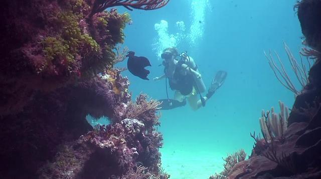 @BurnthouseProd Underwater Camera Showreel #Bermuda 2010