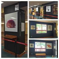 #Nonsuch Expeditions Art Installation #Bermuda Airport @NonsuchIsland