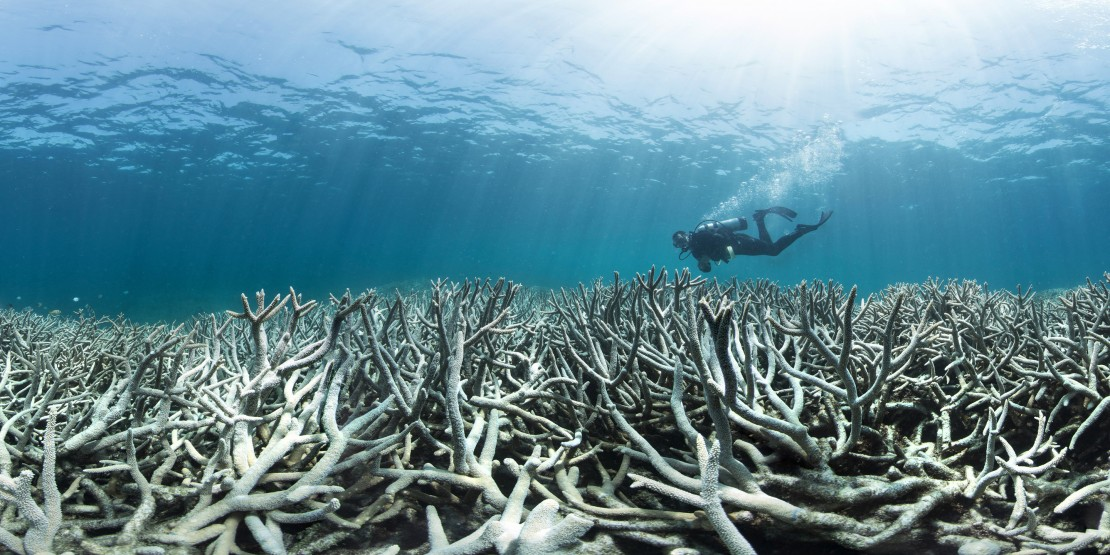 Coral Reefs Face Extinction – @ChasingCoral @ExposureLabs @Netflix Documentary