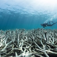 Coral Reefs Face Extinction - @ChasingCoral @ExposureLabs @Netflix Documentary