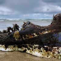 Why are Nike trainers washing up on beaches from #Bermuda #Bahamas to #Ireland & #Orkney ? @BBCNews
